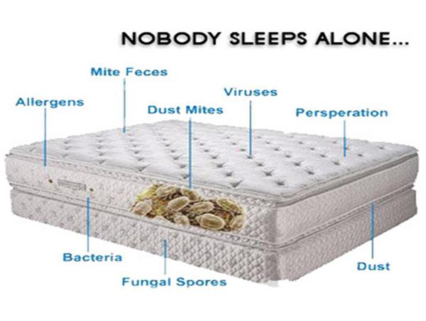 Mattress Infestations Dust Mites Alergens Bacteria Fungal Spores Etc